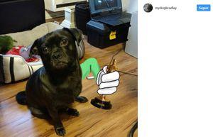 A este perrito le falta una pata y su dueño se la pinta en Instagram