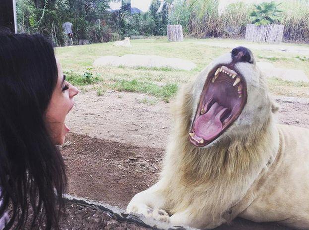 Camila vs leone