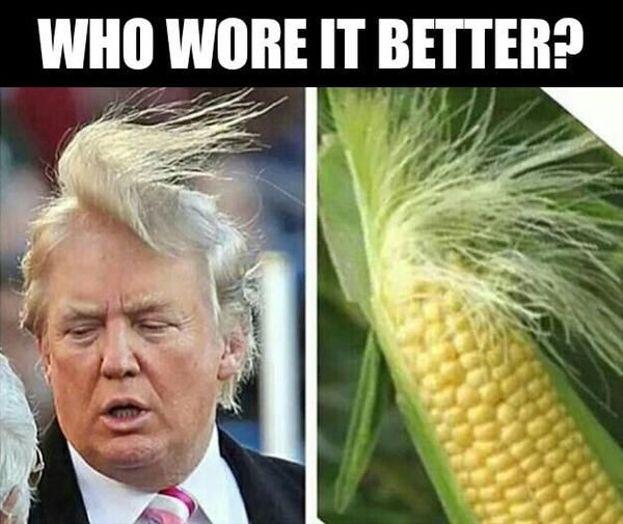 Chi li porta meglio: Donald Trump o la pannocchia? Meme a raffica per i capelli del neoeletto presidente degli Stati Uniti.