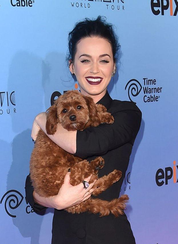 Si chiama Butter il cane di Katy Perry