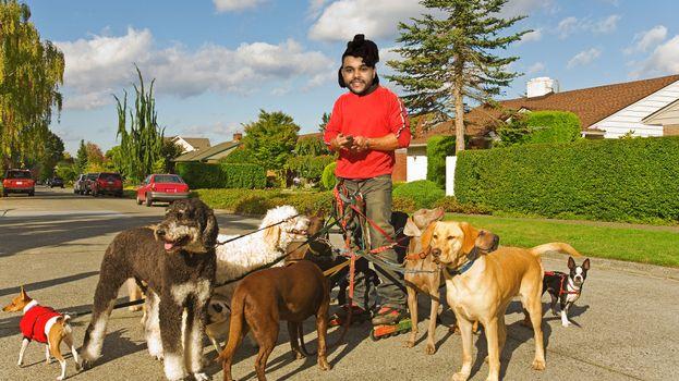 E chi non è felice di portare a spasso il proprio cagnolino scondizolante?