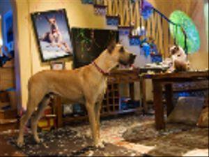 Cani star dei film: quando sono loro i veri protagonisti