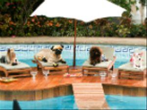 Beverly Hills Chihuahua: trama e info sul film